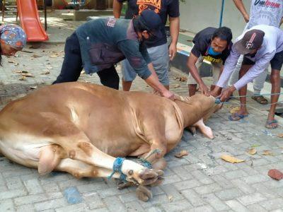 Planet Nufo Membagi Daging Kurban Kepada Warga Sekampung, Monash Institute Berbagi Ke SLB Dan Warga Miskin Kota di Semarang Barat